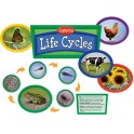Exploring Life Cycles Bb Set