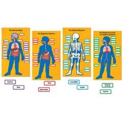 Human Body Bb Set