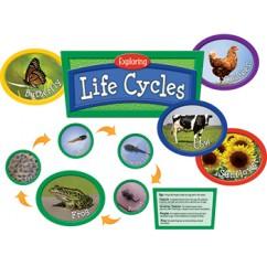 Exploring Life Cycles Bb Set