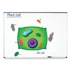 Magnetic Plant Cells