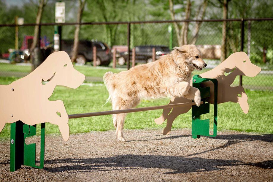 Dog Park Agility Equipment