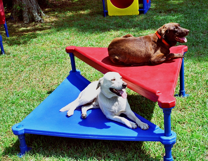 dog agility equipment dog agility training equipment dog agility