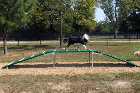 Expert Dog Agility Courses | Agility Equipment | Dog Walk