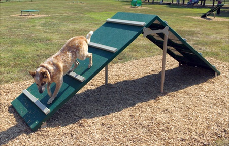 King of the Hill Dog Park | Dog Agility Obstacles | Agility Equipment