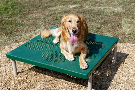Dog Park Paws Table | Dog Agility Obstacles | Agility Equipment