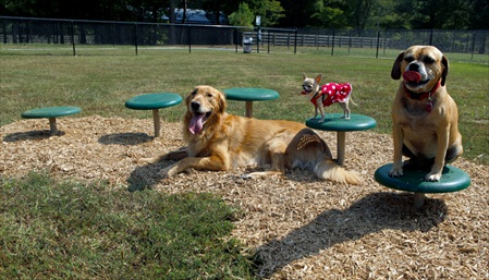 Stepping Paws Dog Park | Dog Agility Obstacles | Agility Equipment
