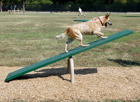 Expert Dog Agility Courses | Agility Equipment | Dog Teeter Totter