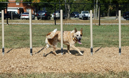 Expert Dog Agility Courses | Agility Equipment | Dog Weave Posts